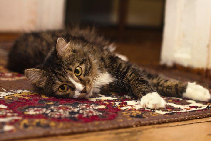 Jak samemu skutecznie wyczyścić dywan i tapicerkę meblową? 9 najlepszych sposobów