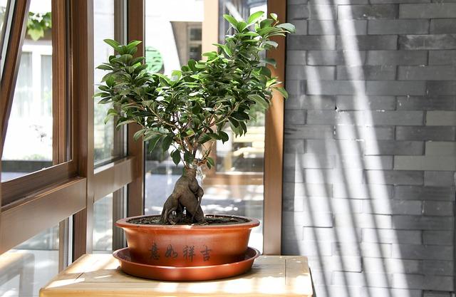 Drzewko japońskie